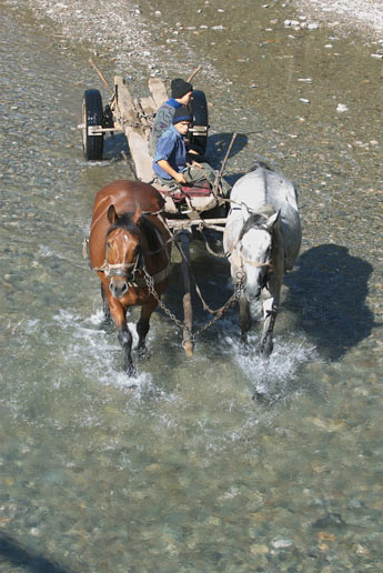 horse car passing the river, photo: Robert Turner